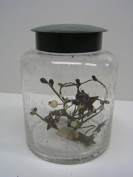 Hunter Green Storage Jar